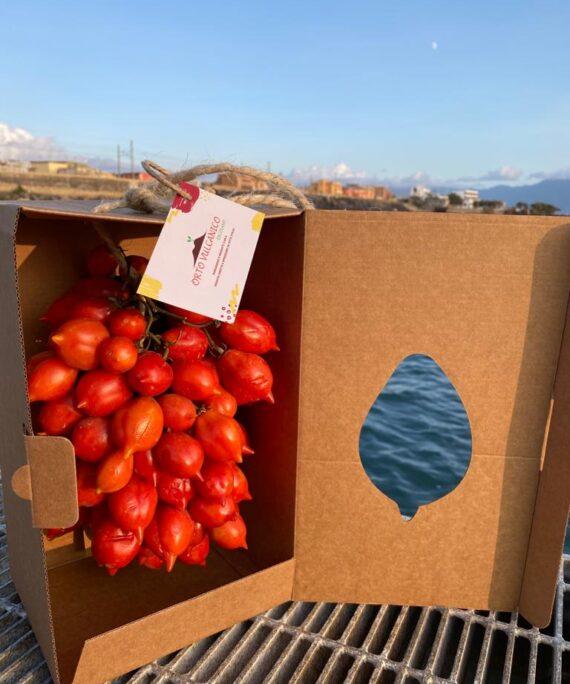 Ceppa pomodori vesuvio